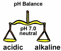 whatfoodsto properly balance ph levels