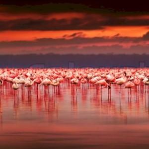 exotic birds in its natural habitat
