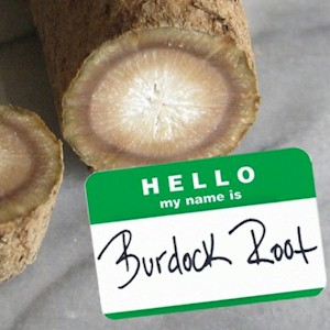 the burdock root is good for detoxing