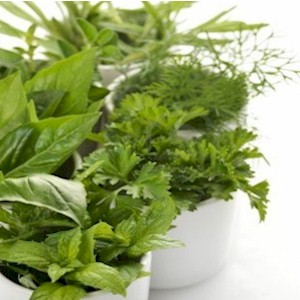 a different variety of fresh herbs